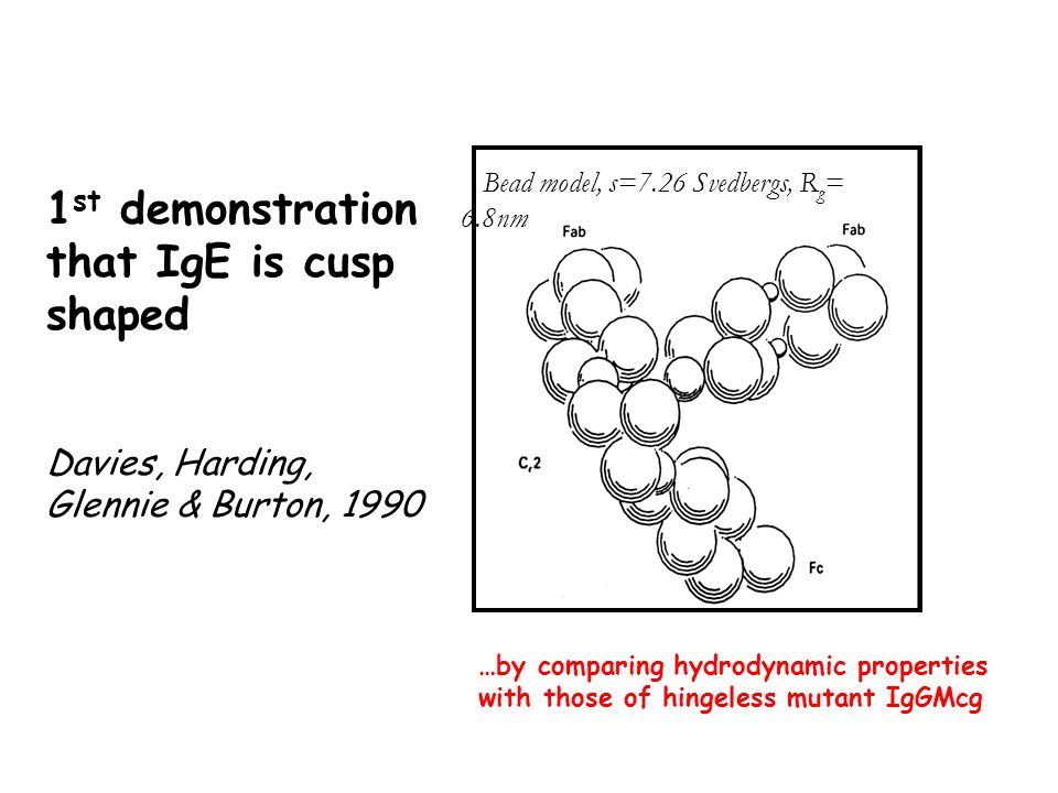 1 st demonstration that IgE is cusp shaped Davies, Harding, Glennie & Burton, 1990 Bead model, s=7.26 Svedbergs, R g = 6.8nm …by comparing hydrodynamic properties with those of hingeless mutant IgGMcg