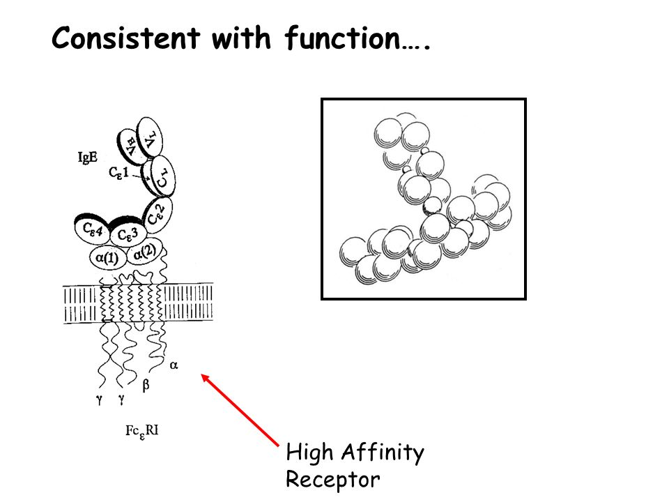 Consistent with function…. High Affinity Receptor