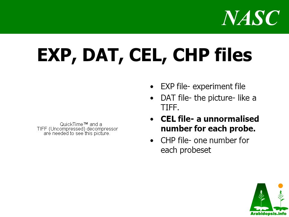 NASC EXP, DAT, CEL, CHP files EXP file- experiment file DAT file- the picture- like a TIFF.