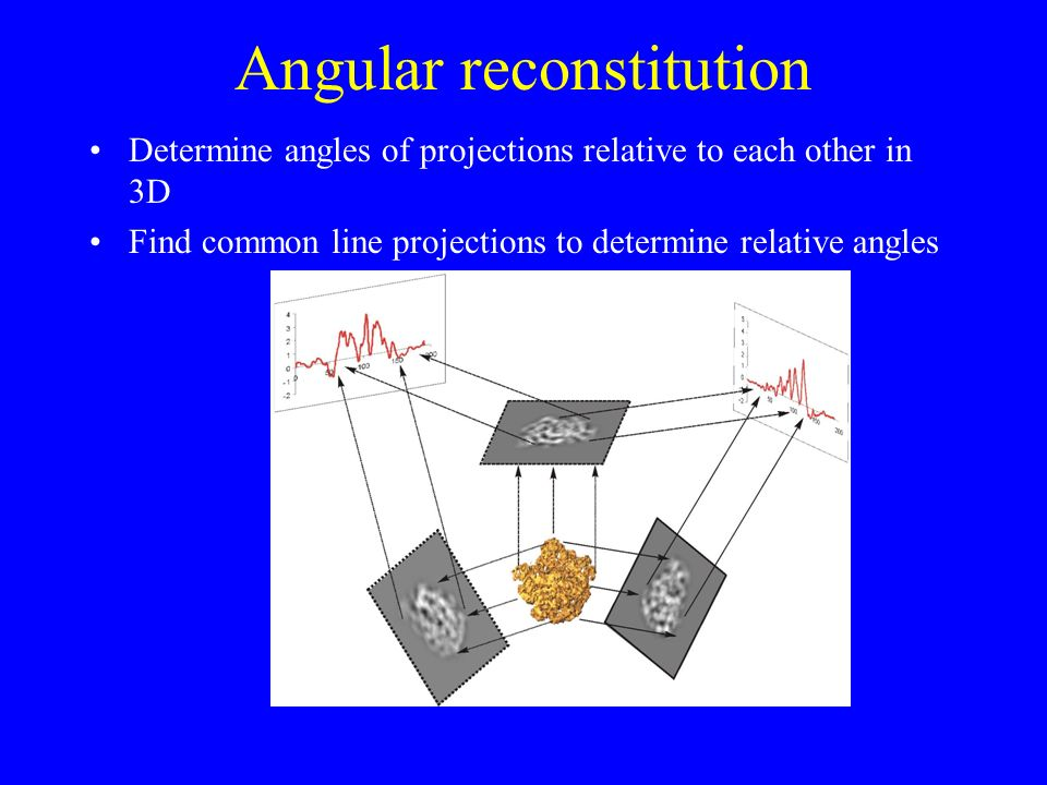 Angular reconstitution Determine angles of projections relative to each other in 3D Find common line projections to determine relative angles