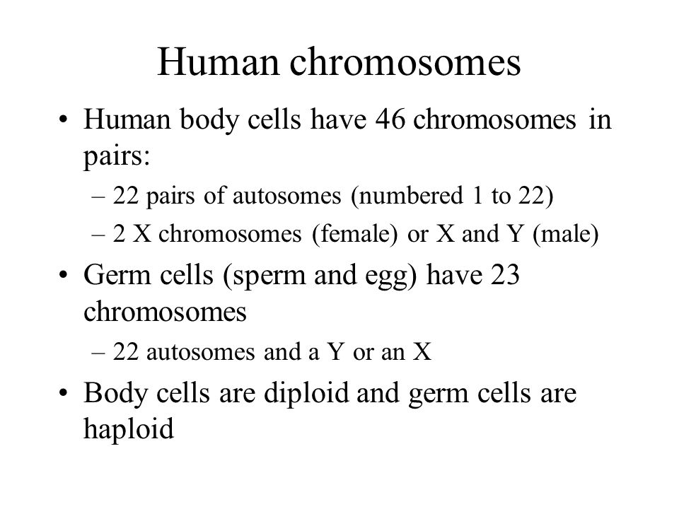 Human chromosomes Human body cells have 46 chromosomes in pairs: –22 pairs of autosomes (numbered 1 to 22) –2 X chromosomes (female) or X and Y (male) Germ cells (sperm and egg) have 23 chromosomes –22 autosomes and a Y or an X Body cells are diploid and germ cells are haploid