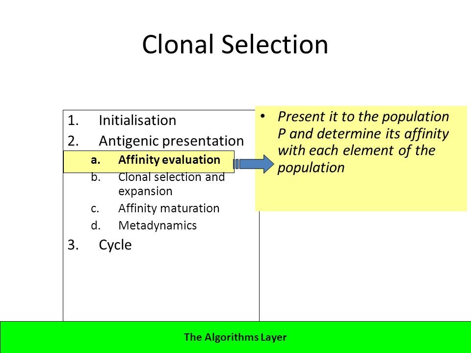 1.Initialisation 2.Antigenic presentation a.Affinity evaluation b.Clonal selection and expansion c.Affinity maturation d.Metadynamics 3.Cycle Lecture 4CBA - Artificial Immune Systems Clonal Selection Present it to the population P and determine its affinity with each element of the population The Algorithms Layer