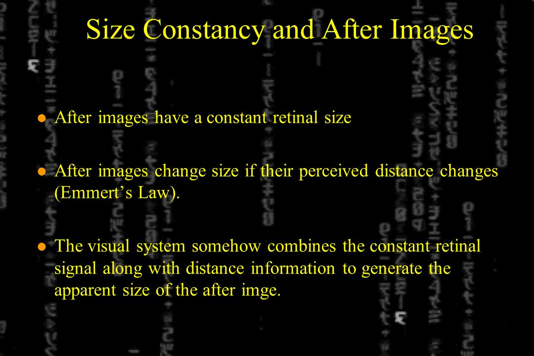 Size Constancy and After Images l After images have a constant retinal size l After images change size if their perceived distance changes (Emmerts Law).