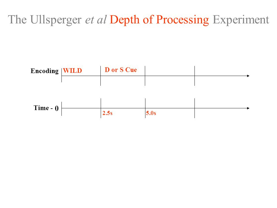 The Ullsperger et al Depth of Processing Experiment 0 Time - D or S Cue Encoding WILD 2.5s5.0s