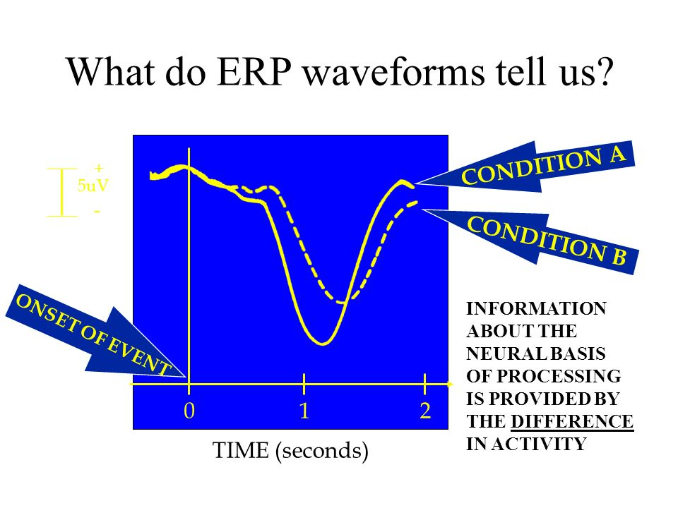 What do ERP waveforms tell us.