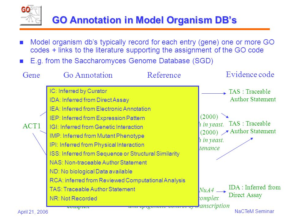 April 21, 2006 NaCTeM Seminar GO Annotation in Model Organism DBs Model organism dbs typically record for each entry (gene) one or more GO codes + links to the literature supporting the assignment of the GO code E.g.