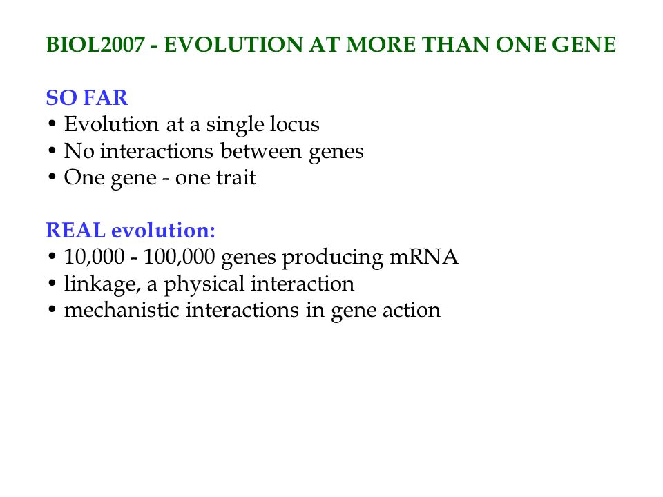 BIOL2007 - EVOLUTION AT MORE THAN ONE GENE SO FAR Evolution at a single locus No interactions between genes One gene - one trait REAL evolution: 10,000 - 100,000 genes producing mRNA linkage, a physical interaction mechanistic interactions in gene action