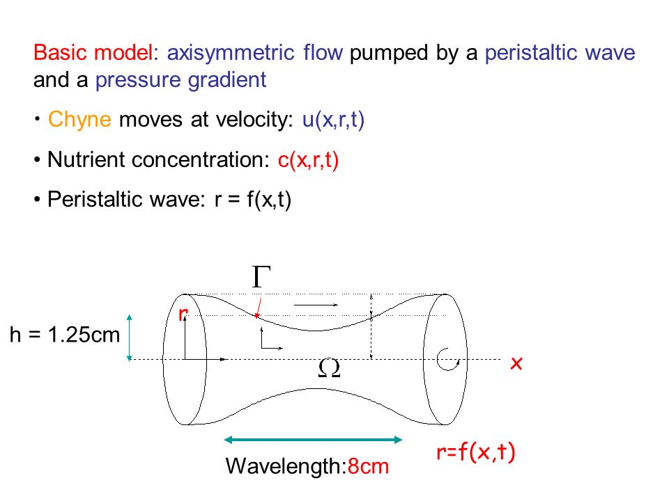 Basic model: axisymmetric flow pumped by a peristaltic wave and a pressure gradient Chyne moves at velocity: u(x,r,t) Nutrient concentration: c(x,r,t) Peristaltic wave: r = f(x,t) x r=f(x,t) r Wavelength:8cm h = 1.25cm