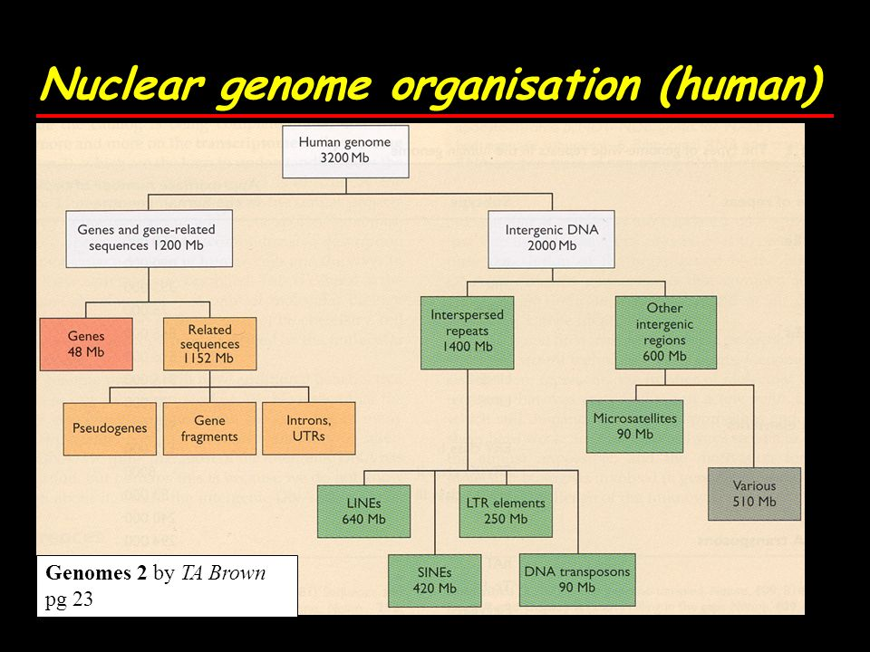 Nuclear genome organisation (human) Genomes 2 by TA Brown pg 23