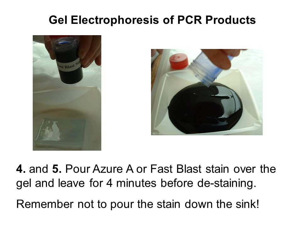 gel electrophoresis assignment Page (polyacrylamide gel electrophoresis) , is the most widely used analytical method to resolve separate components of a protein mixture based on their size.