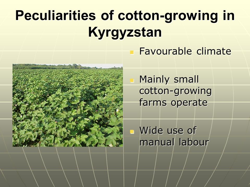 Peculiarities of cotton-growing in Kyrgyzstan Favourable climate Favourable climate Mainly small cotton-growing farms operate Mainly small cotton-growing farms operate Wide use of manual labour Wide use of manual labour