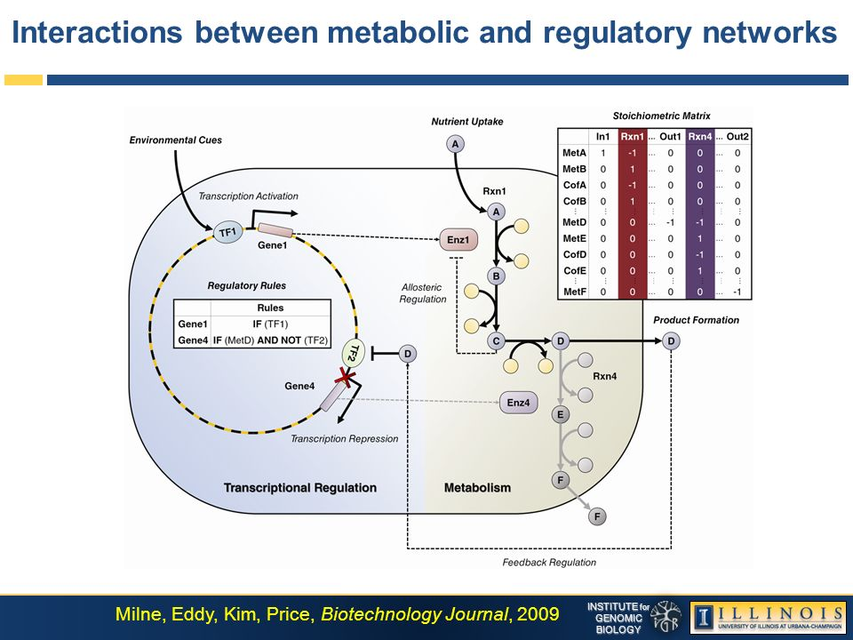INSTITUTE for GENOMICBIOLOGY Interactions between metabolic and regulatory networks Milne, Eddy, Kim, Price, Biotechnology Journal, 2009