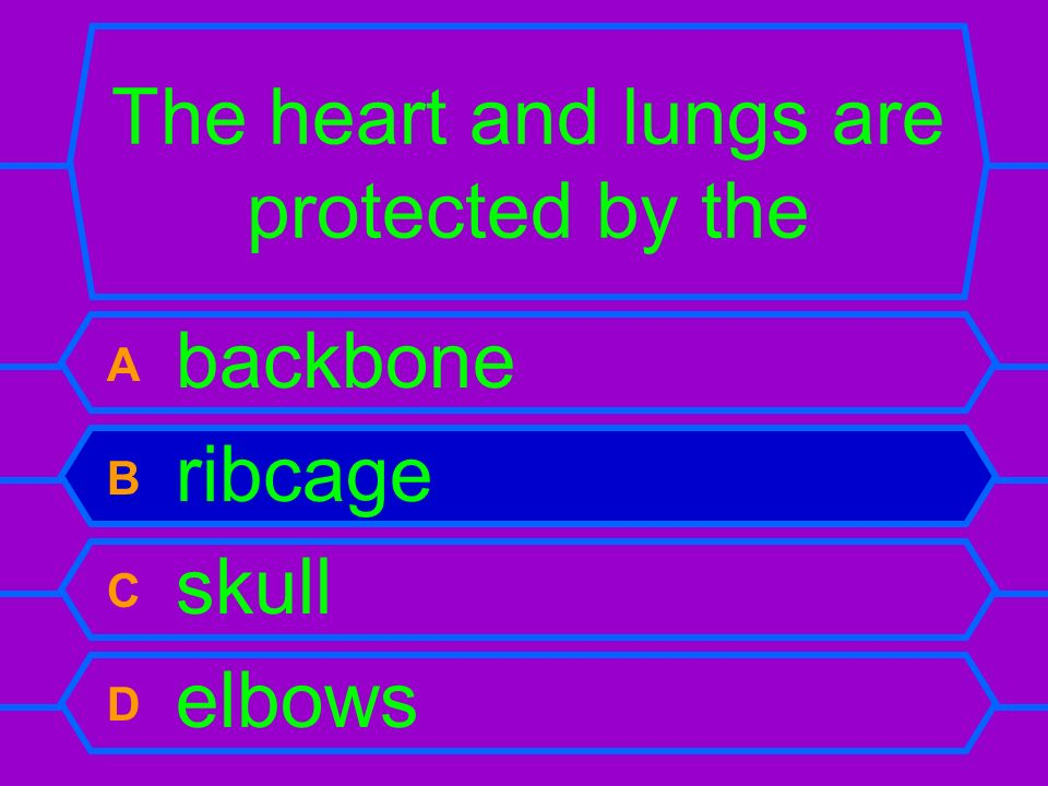 The heart and lungs are protected by the A backbone B ribcage C skull D elbows
