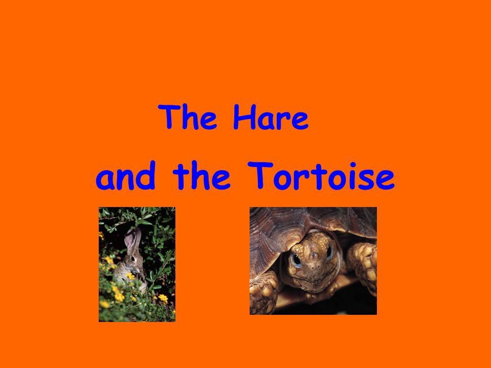 and the Tortoise The Hare