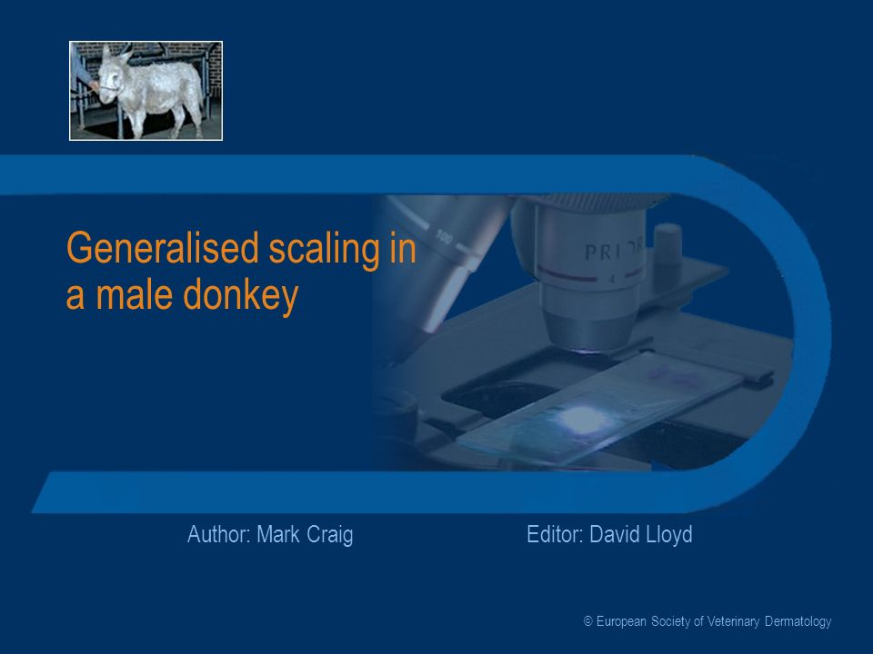 Generalised scaling in a male donkey Author: Mark CraigEditor: David Lloyd © European Society of Veterinary Dermatology