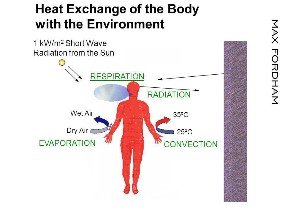 1 kW/m 2 Short Wave Radiation from the Sun RADIATION RESPIRATION EVAPORATION 35ºC 25ºC CONVECTION Wet Air Dry Air Heat Exchange of the Body with the Environment
