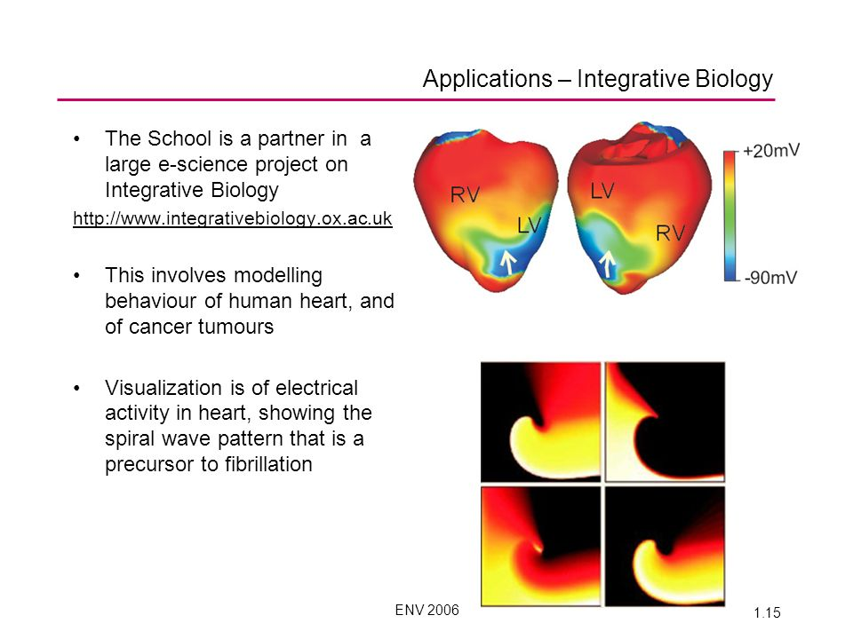 ENV 2006 1.15 Applications – Integrative Biology The School is a partner in a large e-science project on Integrative Biology http://www.integrativebiology.ox.ac.uk This involves modelling behaviour of human heart, and of cancer tumours Visualization is of electrical activity in heart, showing the spiral wave pattern that is a precursor to fibrillation