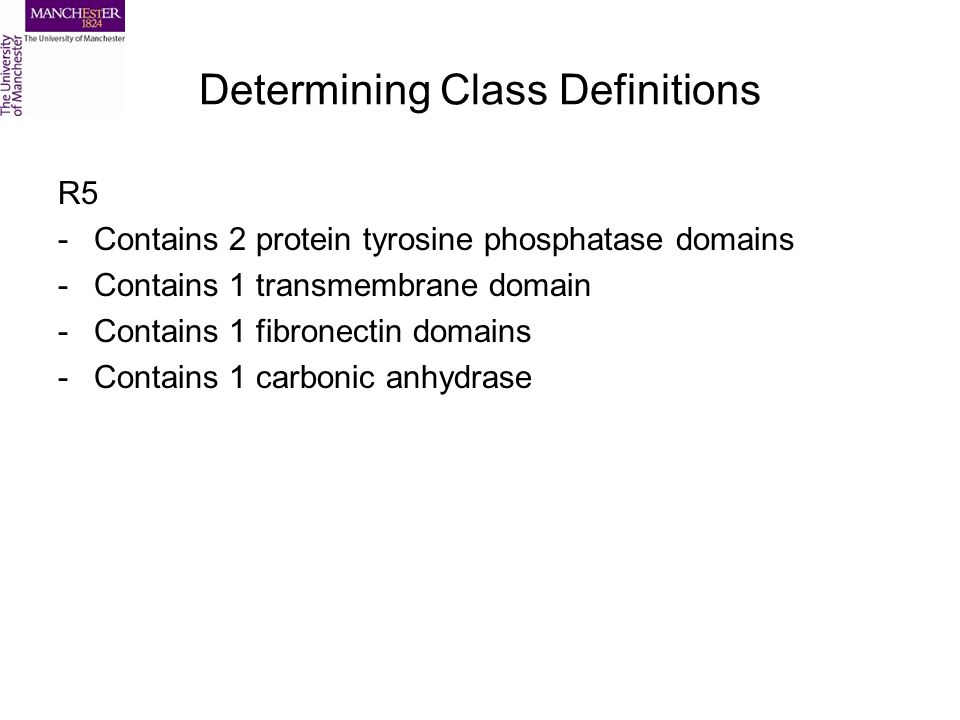 Determining Class Definitions R5 -Contains 2 protein tyrosine phosphatase domains -Contains 1 transmembrane domain -Contains 1 fibronectin domains -Contains 1 carbonic anhydrase