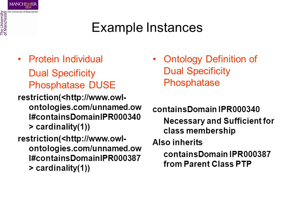 Example Instances Protein Individual Dual Specificity Phosphatase DUSE restriction( cardinality(1)) Ontology Definition of Dual Specificity Phosphatase containsDomain IPR000340 Necessary and Sufficient for class membership Also inherits containsDomain IPR000387 from Parent Class PTP