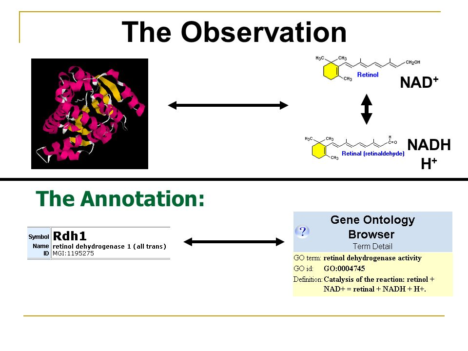 The Annotation: The Observation NAD + NADH H +