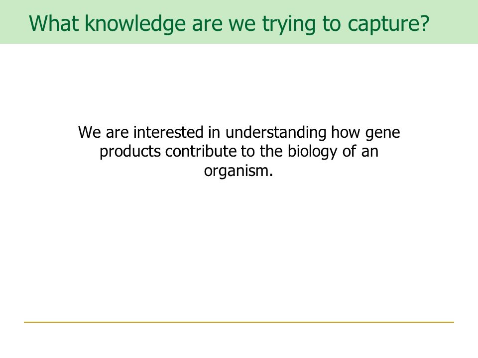 We are interested in understanding how gene products contribute to the biology of an organism.