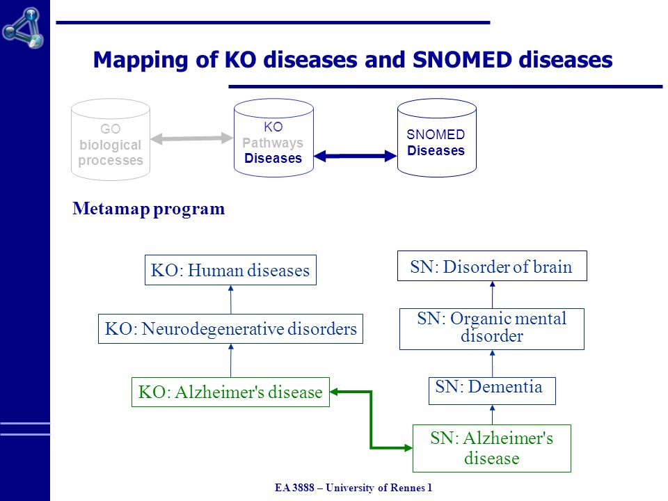 EA 3888 – University of Rennes 1 Mapping of KO diseases and SNOMED diseases GO biological processes KO Pathways Diseases SNOMED Diseases Metamap program SN: Alzheimer s disease SN: Organic mental disorder SN: Dementia KO: Human diseases KO: Neurodegenerative disorders KO: Alzheimer s disease SN: Disorder of brain
