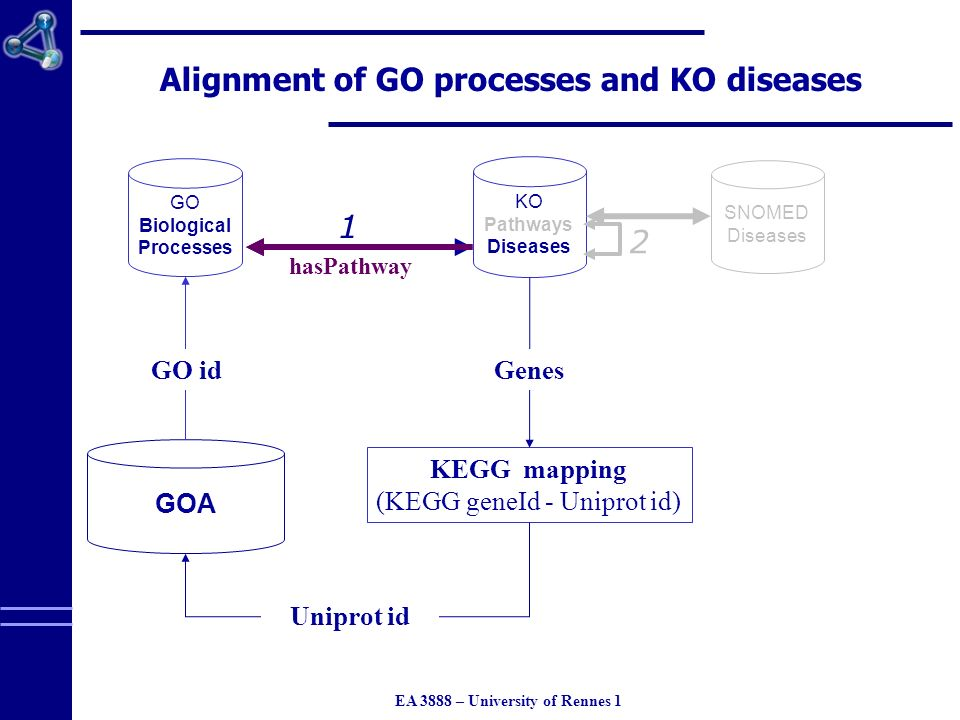 EA 3888 – University of Rennes 1 1 Alignment of GO processes and KO diseases GO Biological Processes KO Pathways Diseases 2 SNOMED Diseases KEGG mapping (KEGG geneId - Uniprot id) GOA Genes Uniprot id GO id 1 hasPathway