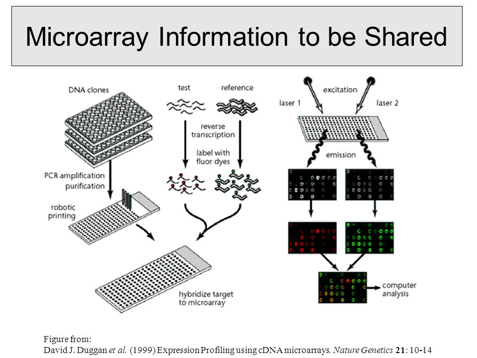 Microarray Information to be Shared Figure from: David J.