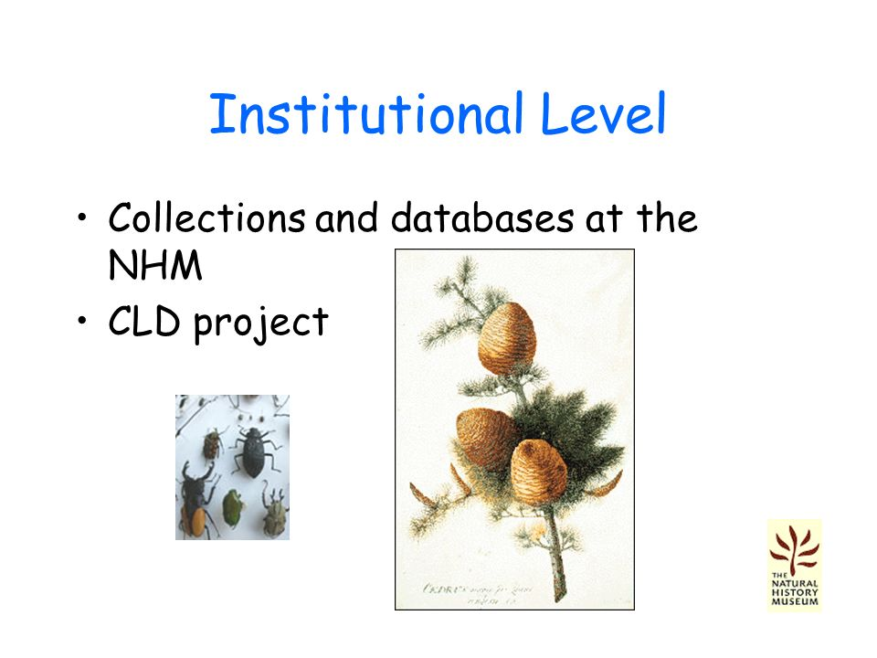 Institutional Level Collections and databases at the NHM CLD project