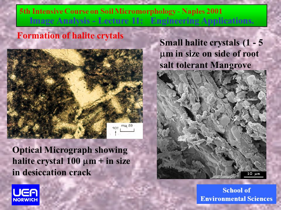 School of Environmental Sciences Formation of halite crytals Optical Micrograph showing halite crystal 100 m + in size in desiccation crack Small halite crystals (1 - 5 m in size on side of root salt tolerant Mangrove 5th Intensive Course on Soil Micromorphology - Naples 2001 Image Analysis - Lecture 11: Engineering Applications.