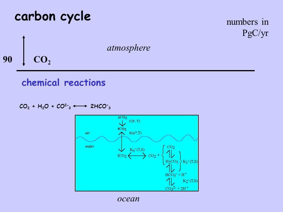 carbon cycle CO 2 CO 2 + H 2 O + CO 2- 3 2HCO - 3 chemical reactions 90 numbers in PgC/yr atmosphere ocean