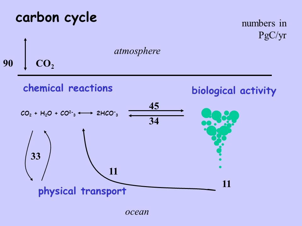 carbon cycle 45 34 physical transport 11 33 CO 2 CO 2 + H 2 O + CO 2- 3 2HCO - 3 chemical reactions 90 numbers in PgC/yr biological activity 11 atmosphere ocean