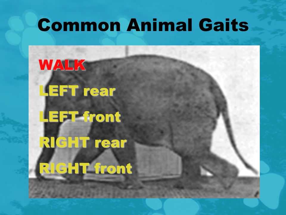 Example: Animal Gaits Eadweard Muybridge