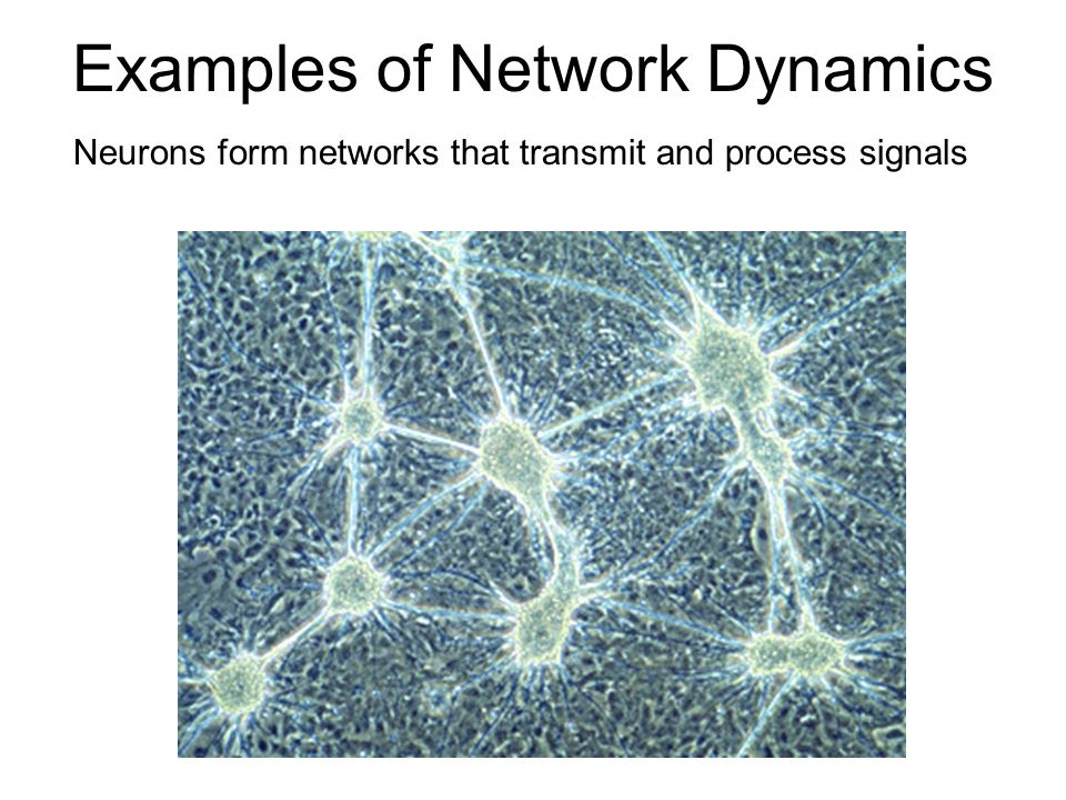 Examples of Network Dynamics nerve cell or neuron