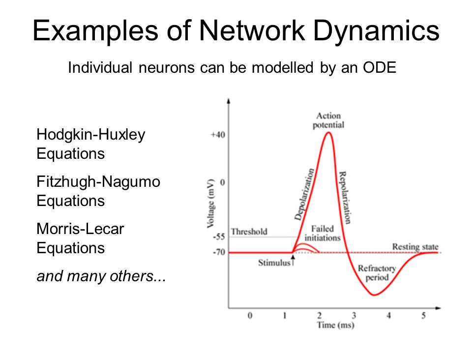 Examples of Network Dynamics Neurons form networks that transmit and process signals