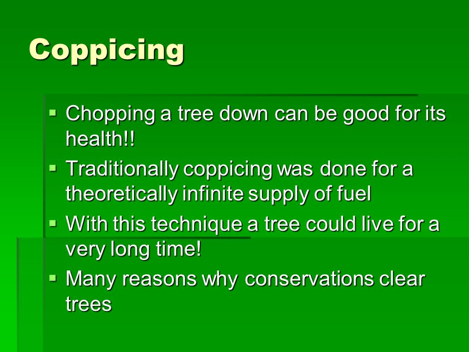 Coppicing Chopping a tree down can be good for its health!.