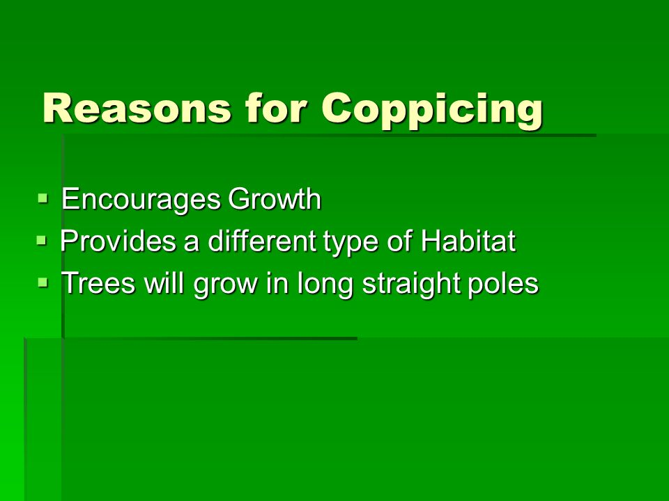Reasons for Coppicing Encourages Growth Encourages Growth Provides a different type of Habitat Provides a different type of Habitat Trees will grow in long straight poles Trees will grow in long straight poles