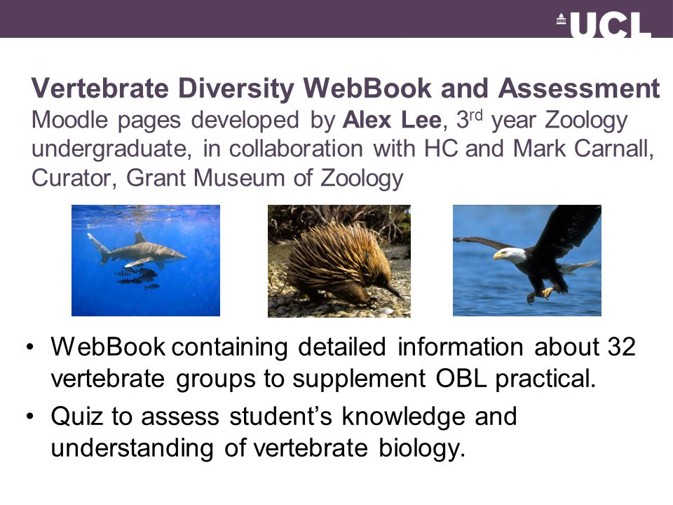 Vertebrate Diversity WebBook and Assessment Moodle pages developed by Alex Lee, 3 rd year Zoology undergraduate, in collaboration with HC and Mark Carnall, Curator, Grant Museum of Zoology WebBook containing detailed information about 32 vertebrate groups to supplement OBL practical.