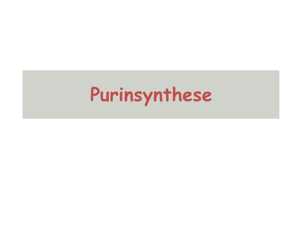Purinsynthese