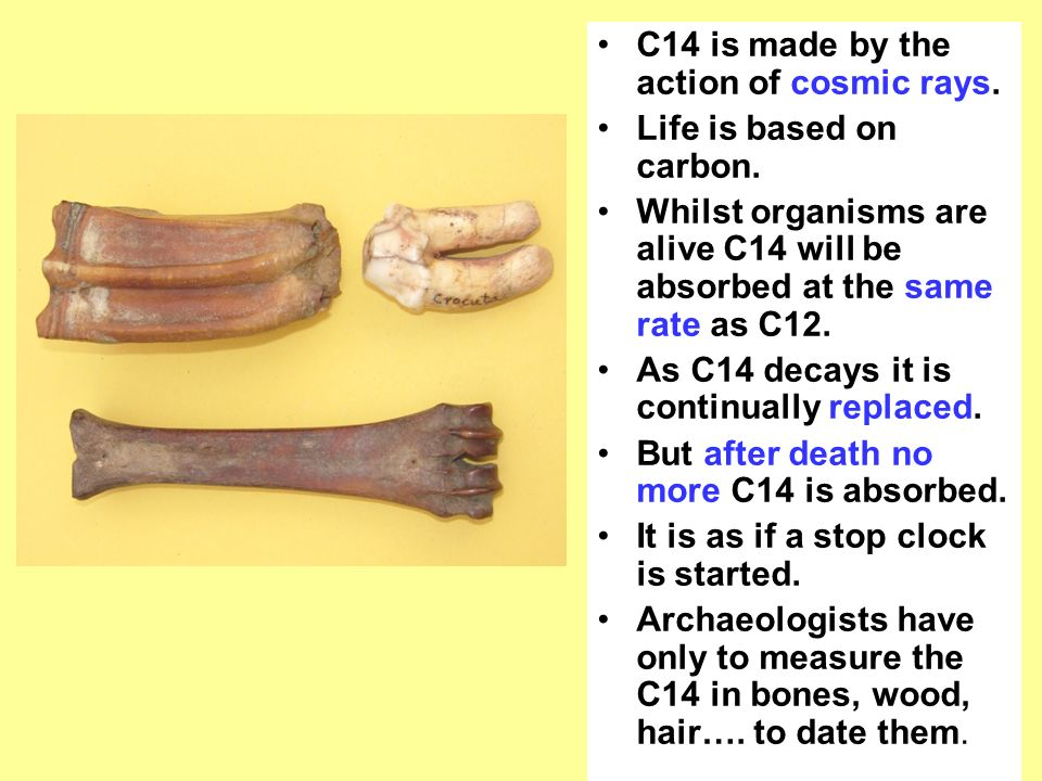 carbon dating c12 to c14