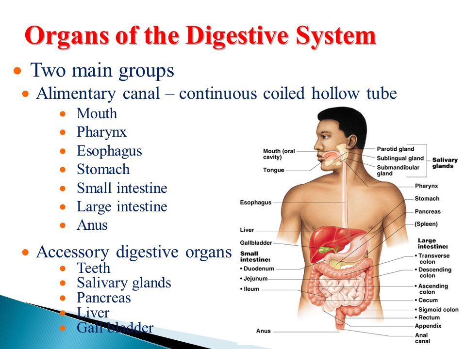 Function Of Digestive System Digestion The Mechanical And