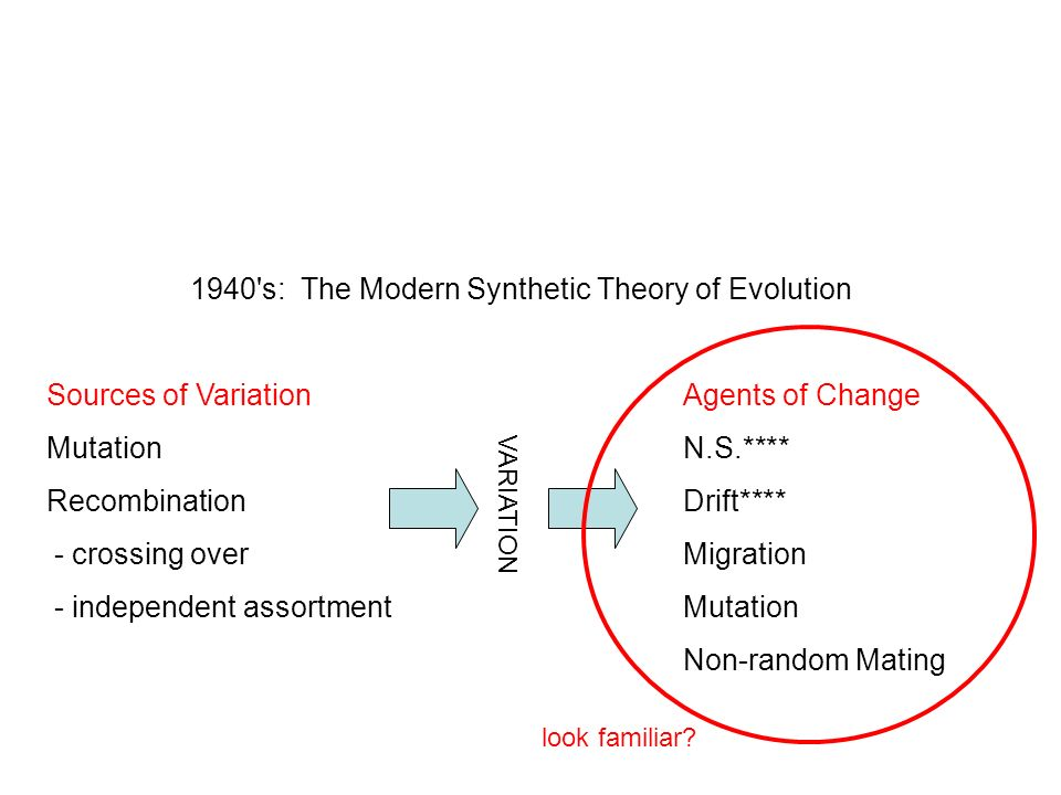 modern synthetic theory