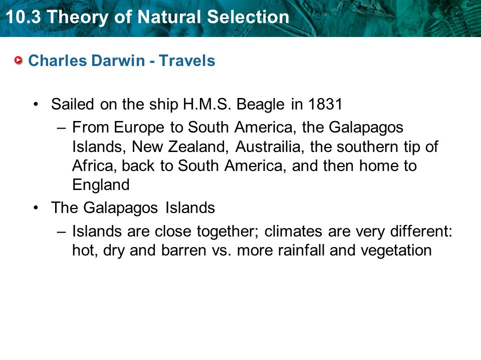 an analysis of charles darwins theory of natural selection and evolution Darwin did not rush his ideas about evolution and natural selection into print note: charles darwin was an active collector of plant and animal specimens and a prodigious he misapplied darwin's idea of natural selection to justify european domination and.