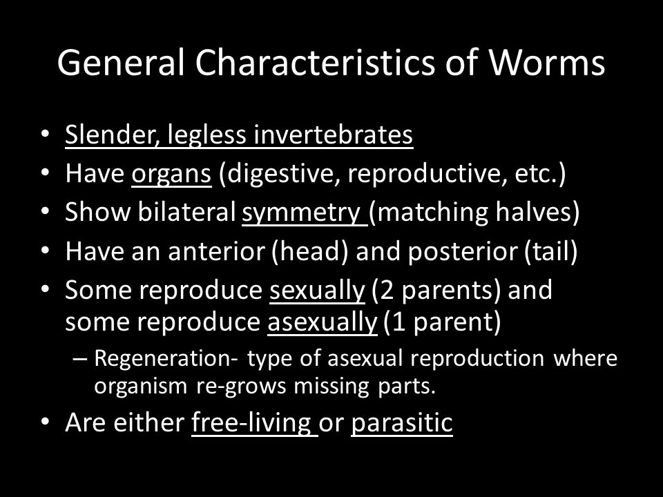Annelid worms asexual reproduction worksheet