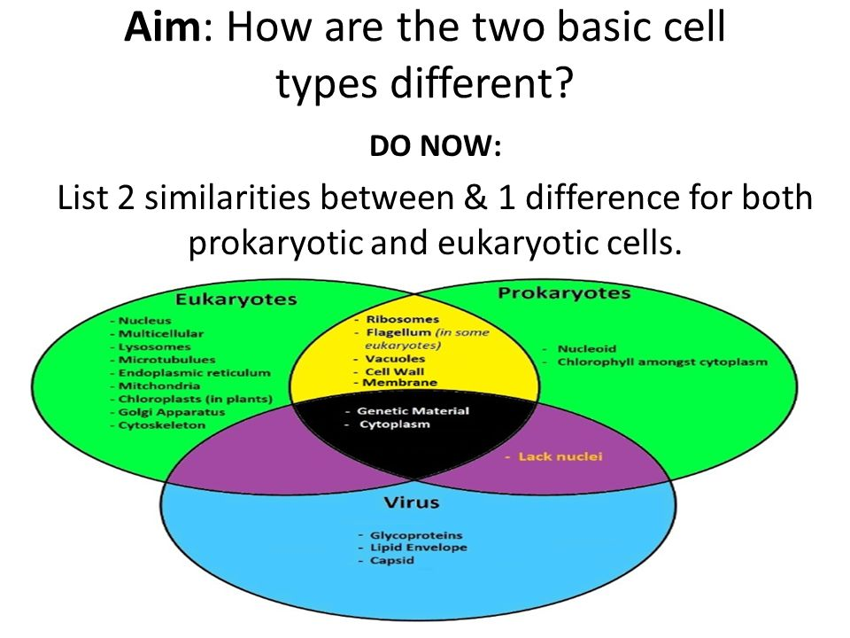 discuss similarities and differences between prokaryote Prokaryotic cell: they happen to be simpler and smaller a prokaryotic cell doesn't possess nucleus or other cell organelles a prokaryotic cell doesn't possess nucleus or other cell organelles it is derived from a greek word meaning before nuclei.