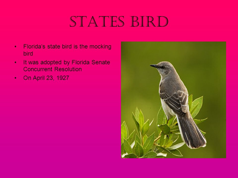 3 States Bird Florida S State Is The Mocking It Was Adopted By