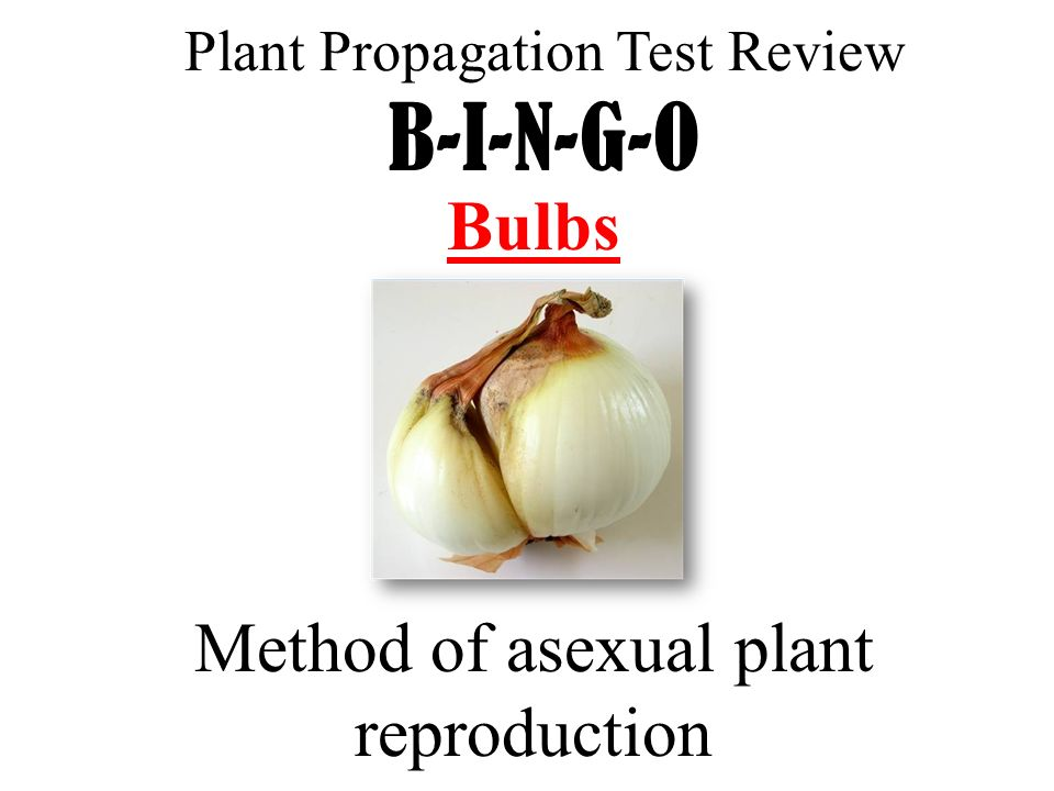Test asexual reproduction of plants