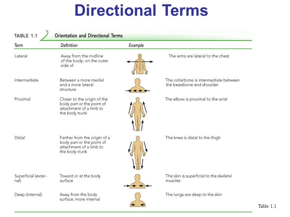 Anatomy Directional Terms Picswe