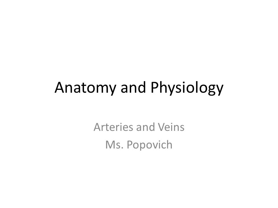 Anatomy And Physiology Arteries And Veins Ms Popovich Ppt Download