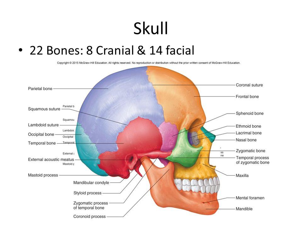 skeleton skull diagram wiring diagramskeletal bones and features axial skeleton skull, spine, thoracic3 skull 22 bones 8 cranial